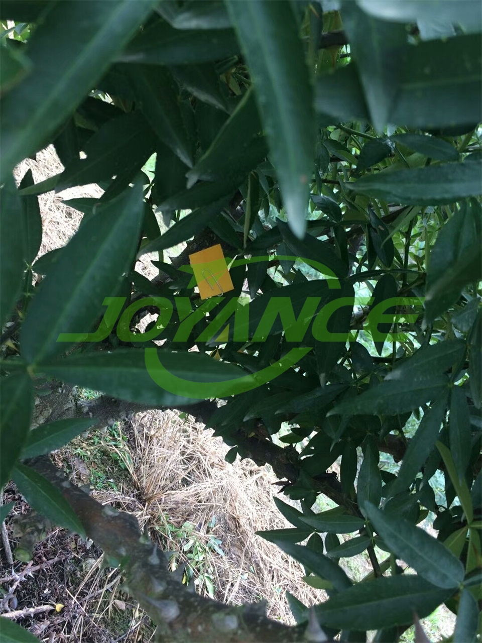 sprayer drone spray fruit trees